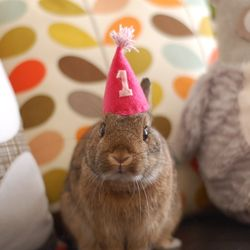 Bunny Bunz Birthday 2017