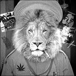 Ride the Lion to Zion (Reggae)