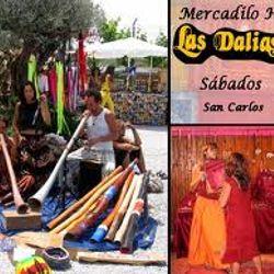 Las Dalias Ibiza 25 aniversario en Ibiza Sonica