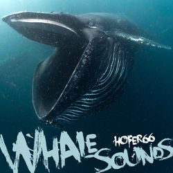 hofer66 - whale sounds - live at ibiza global radio 180521