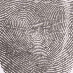 Si - Fingerprint [enr13]