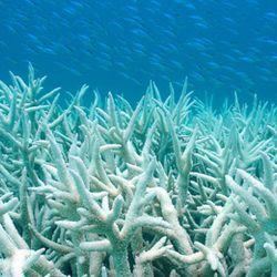 What's happening with the coral ? We asked Larissa Rhodes producer of award winning Chasing Coral