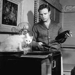 RockNRoll in 1956   Shay Landa X DJ Fontana   04/07/18