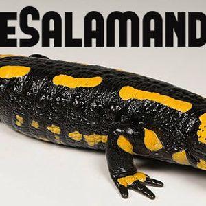 Saving Salamanders from extinction is a daunting task