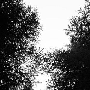 0040 // The Weald