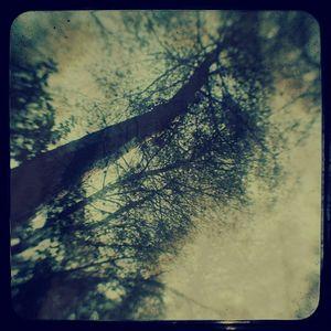 OreCast 116 - Forest of Shadows