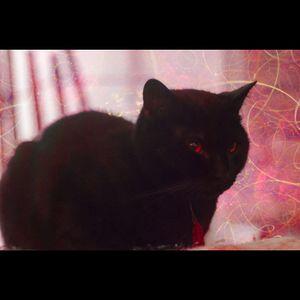 Cat Is A DJ