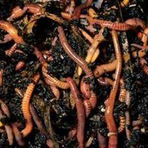 In the Garden feat. Jon 'the worm' Wilcox