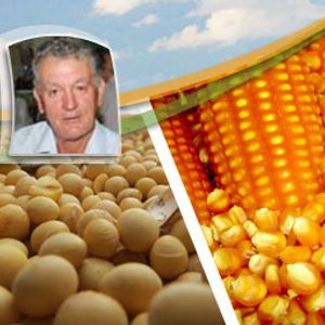 Em Ijuí (RS), produtores se preparam para a colheita do milho e a perspectiva é de queda de 30% na p