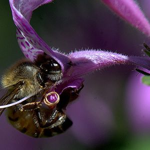 Nectar Mix