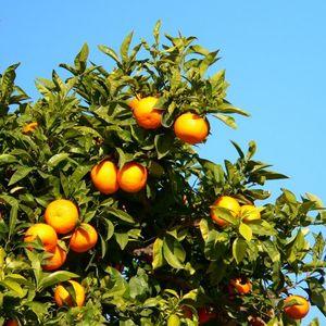 New Fruit (Lol Boys - Dillon Francis - Filosofischestilte - Salva - MRK1 - Blue Daisy - Like Mind)