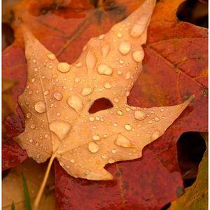 Autumnal Electro!