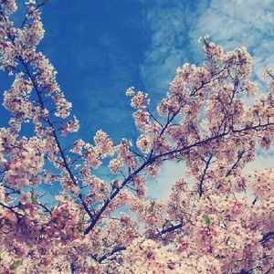 Tumbling Blossom