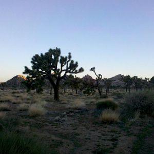 Palm Desert Mix by Angel FreQ