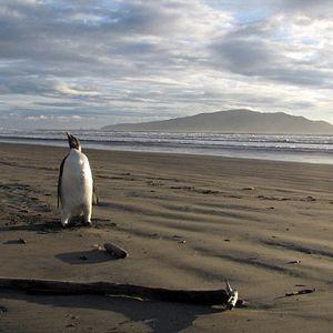 Solaris2222 - Lost Penguin (2010)