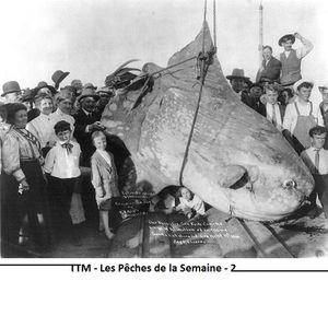 TTM ♦ Les Pêches de la Semaine ♦ 2