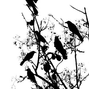 One Hundred Plastic Crows