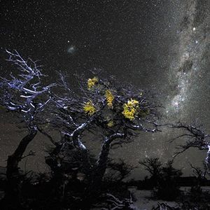 One Windswept Patagonian Night