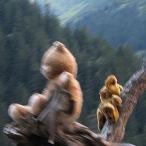 Mixtape Wednesday-DjUlises-Don't Judge Me Monkey!