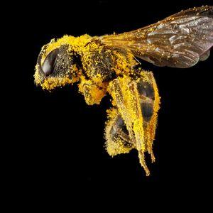 BuzzFeed: Wild Bees Meet Urban Farming