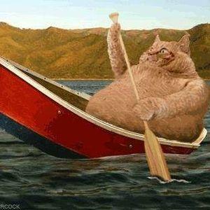 The Fat Cat's Chill