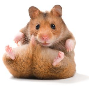 #30 - Prince, Ginola and Hamster Genitals