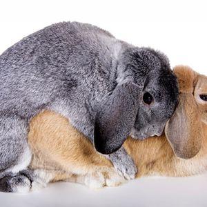Freaky Bunnies