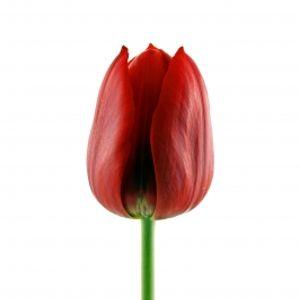 """Koks yra moterų """"solidarumas"""" kovo 8-ąją?"""