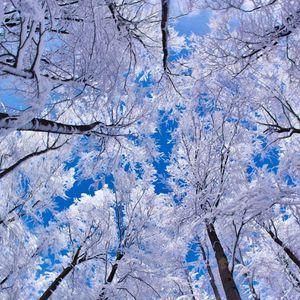Tech winter