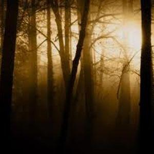 D. Humo - Late Fall - October 2011 set