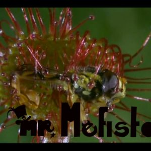 Bass In-Tensions ''Dubstep, Bass and Jungle'' set by *mr. Mefistou*