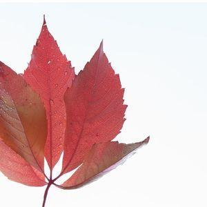 Autumn - October