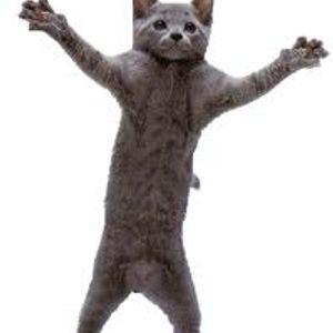 F.B-Kurze katze schwanze tanze wie ein mause MIX