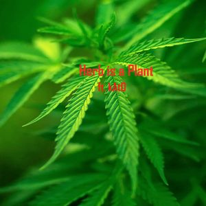 Irie & Fiery Episode 7: Herb is a Plant ft. kAtO, hosted by VibeSelekta Dolla Hilz