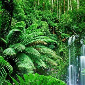 Jungle short set