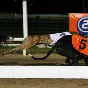 NSW and ACT to ban greyhound racing