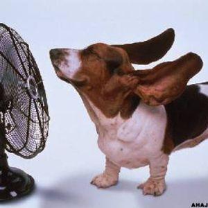Pado - Hot Summer live