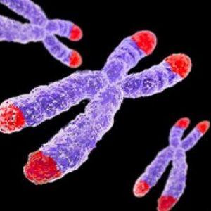 Hormônio masculino funciona como tratamento para alguns casos de anemia, cirrose e fibrose pulmonar