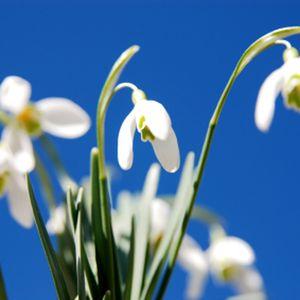 Oh! Klang der Frühlingsglocken!