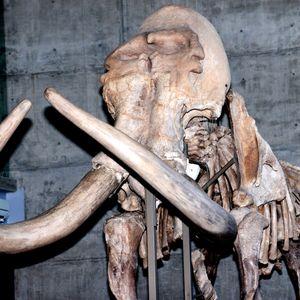Expo. El universo paleontológico en el noreste