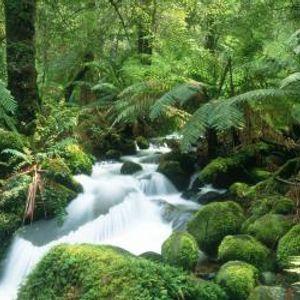 Future Sounds Of Jungle