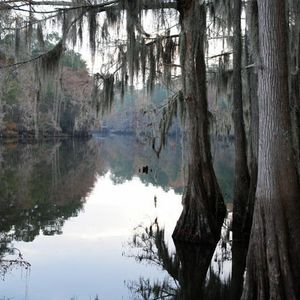 Through the bayou