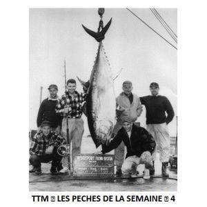 TTM ♦ Les Pêches de la Semaine ♦ 4