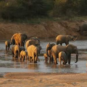 Make a journey with a troop elefants. See how the migrate and witness death and birth among them