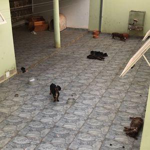 27/07/2017 - Associação denuncia possível maus tratos a animais em residência no Jardim dos Ipês