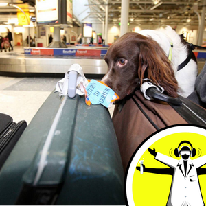 Does Airport Security Really Make Us Safer?