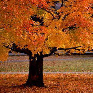 Autumnstep 2009