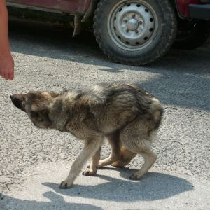Helping the stray dogs in Bulgaria - a task not for the faint hearted