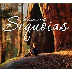 Nature Abounds in California's Sequoia Country