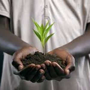 What Will I Plant in the Kingdom?
